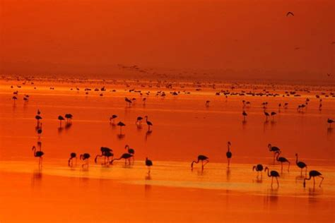 Flamingoes-5-Reasons-Why-Rann-of-Kutch-Should-be-your-Next
