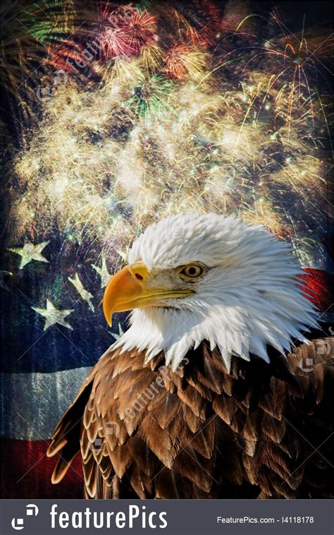 Celebration: Bald Eagle And Fireworks - Stock Picture