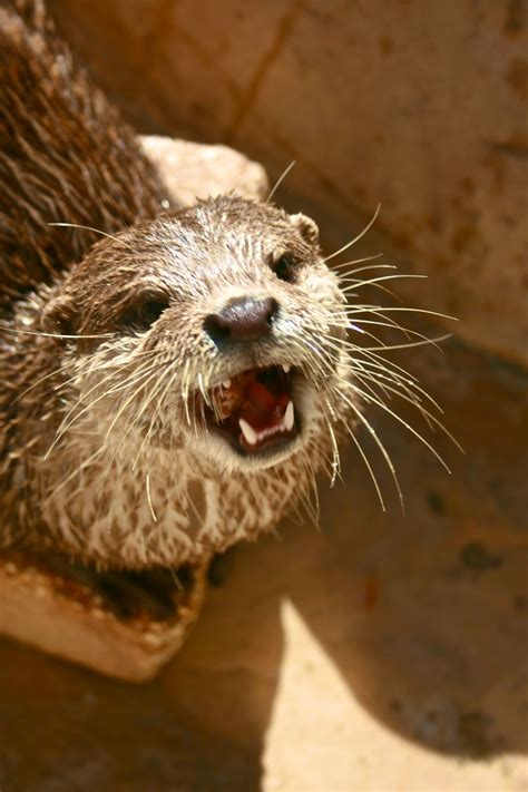 """The Middle Flipper: Why You """"Otter"""" Love Otters"""